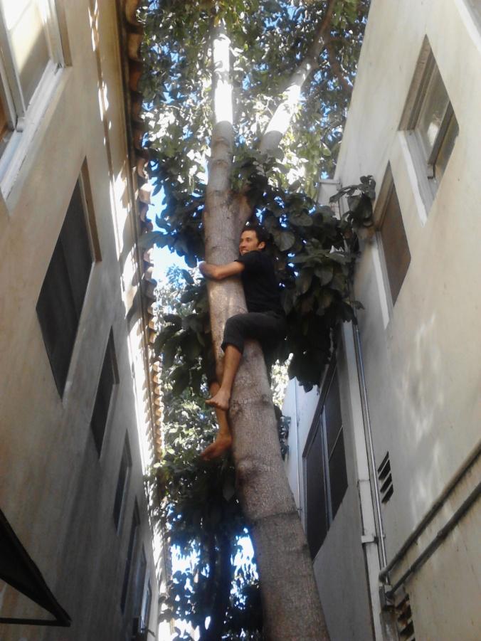 Climbing for Avocados