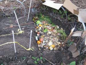 03.  1st layer of kitchen scraps on top of some reedy plant material - the breathing tubes.  within 8 weeks, i expect these kitchen scraps to be converted to composted so il.
