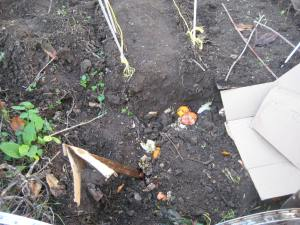 "04. lasagna style composting kitchen scraps covered with water, soil & corrugated cardboard; repeat x 12""."